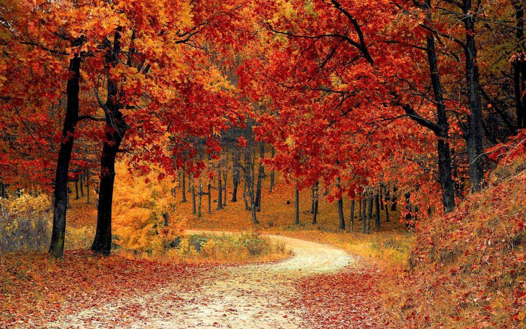 Fall Bereavement Calendar